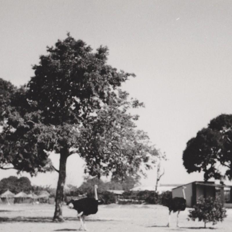 Paisagem com avestruz