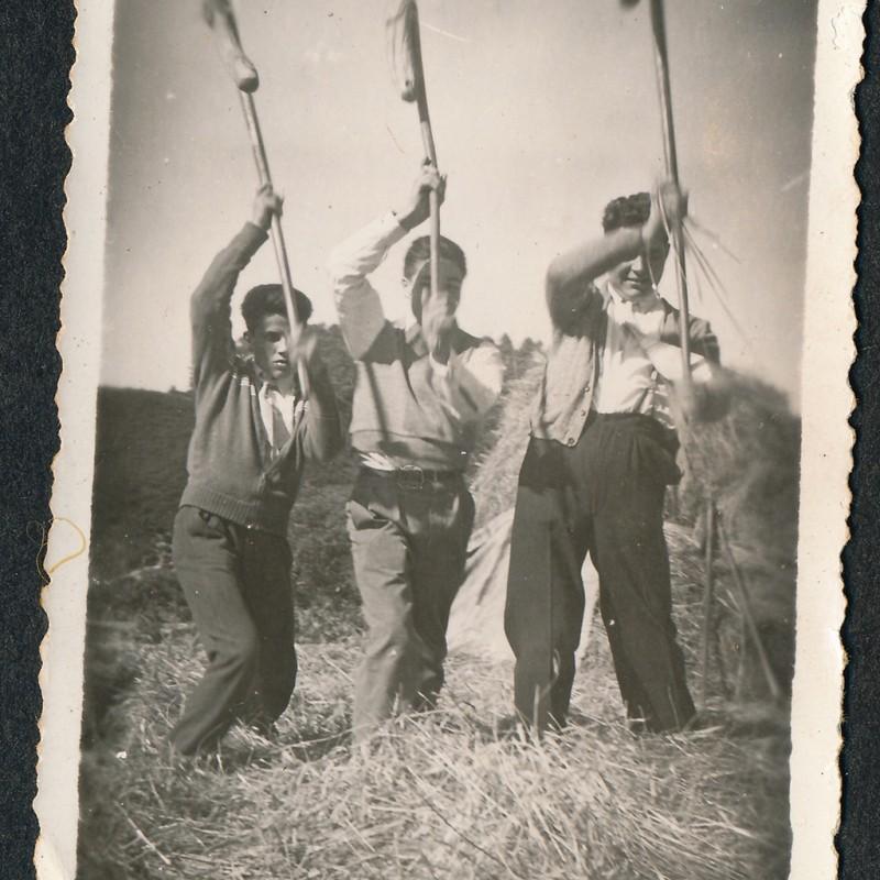 grupo de malhadores